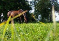 paardenwei.jpg